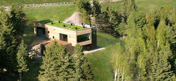Wedo thiết kế nhà đẹp với cây xanh và cỏ