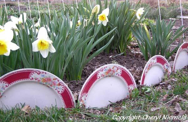 Wedo thiết kế tiểu cảnh sân vườn đơn giản và độc đáo với những chiếc đĩa
