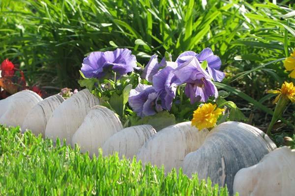 Wedo thiết kế tiểu cảnh sân vườn đơn giản và độc đáo với vỏ sò