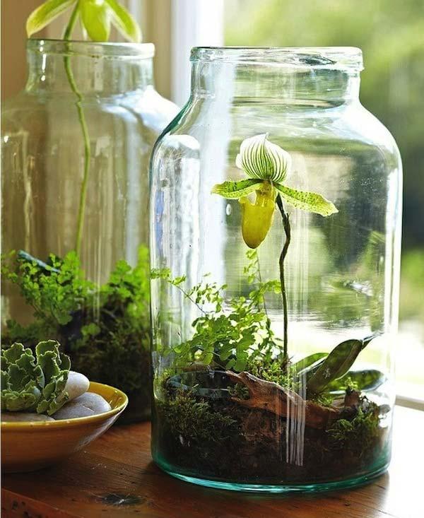 Wedo tư vấn thiết kế chậu cây nhỏ xinh cho nhà đẹp mát mẻ 26