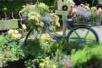 Wedo tư vấn thiết kế sân vườn đẹp như cổ tích với xe đạp cũ